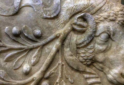 Particolare di testa di ariete nel rilevo marmoreo di Amelia